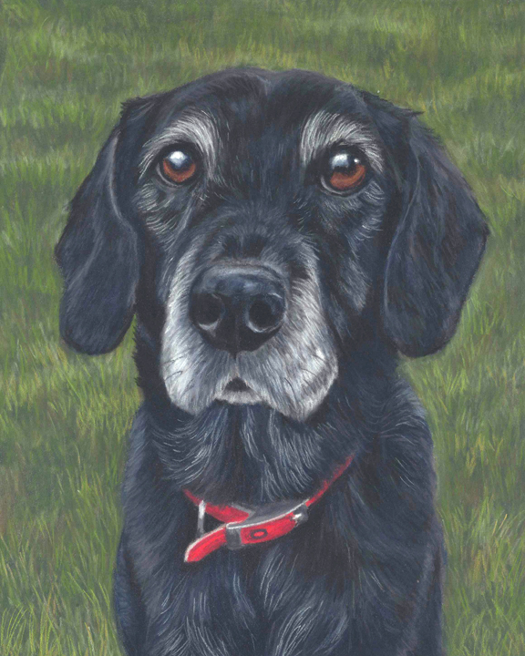 Bess, black collie cross pastel portrait. Sitting on grass with a red collar.