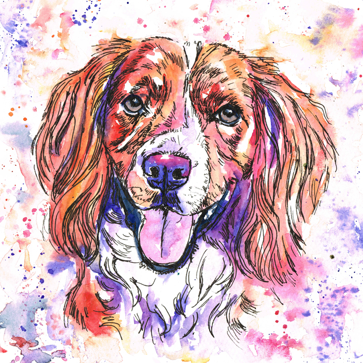 Working Cocker spaniel pet dog portrait in watercolours. Rainbow pet portrait style, using reds, oranges, purples and blues.