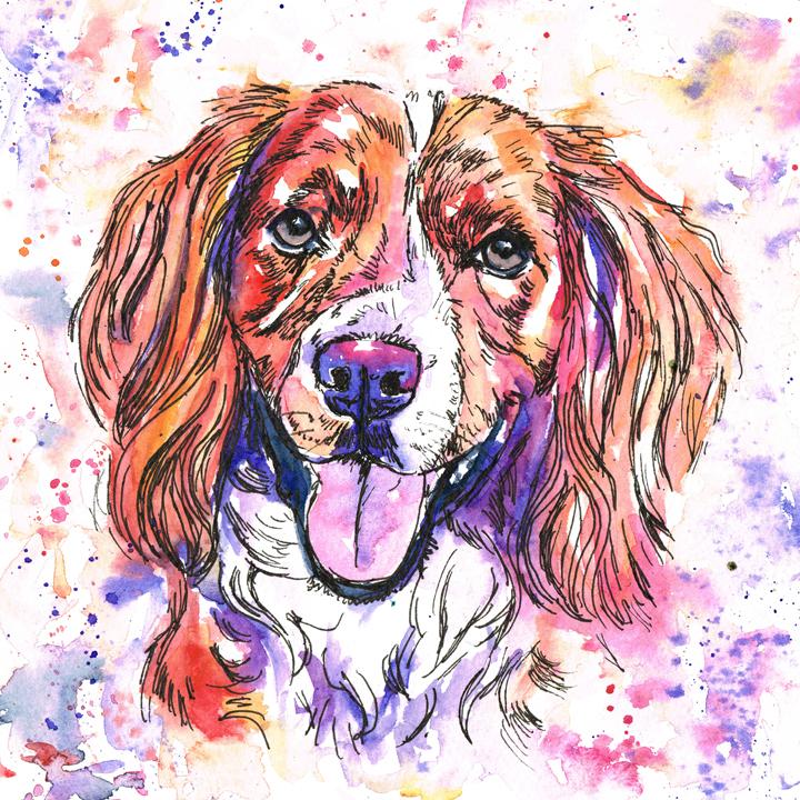 Working Cocker spaniel pet dog portrait in watercolours. Rainbow pet portrait style, using reds, oranges, purples and blues.
