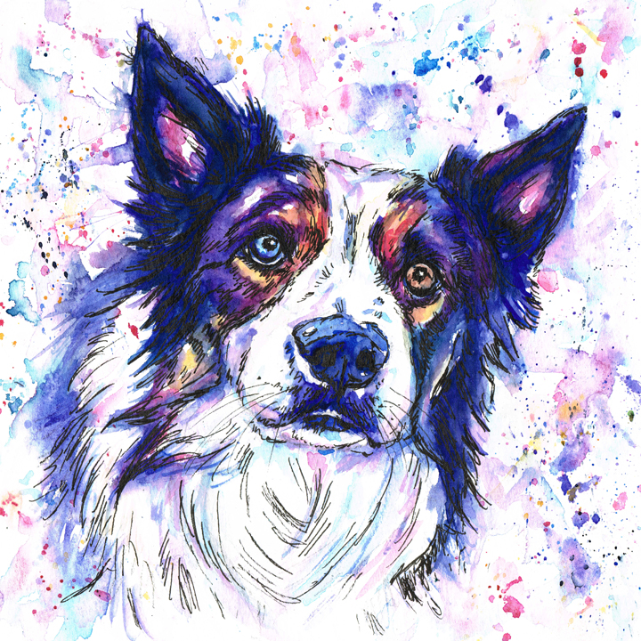 Border collie watercolour pet portrait in blues, purples oranges and yellows