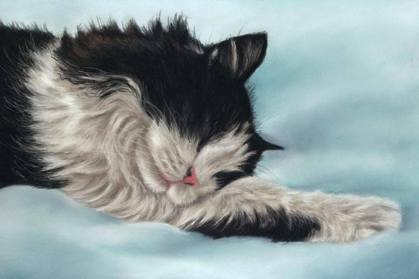 Pastel portrait of cat on blue blanket