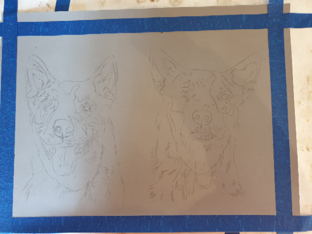 Breaker and Bundy, two Australian  Cattle Dogs, sketched out and ready for me to start painting.