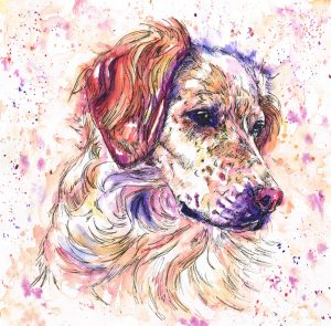 Pet portraits in Jolly Splashes watercolour style using purples, pinks oranges and yellow