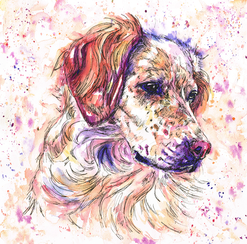 Bella, an English setter watercolour dog portrait. Painte in bright rainbow colours of pinks, purples, blues, yellows and oranges with a pen outline