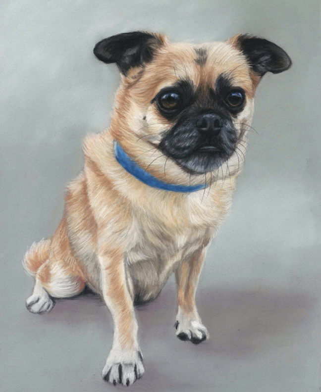 Pickle's finished pastel dog portrait. With a grey background and measuring 11x9 inches