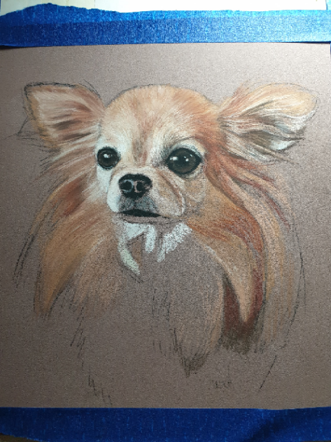 Start of Pixie's pet portrait in pastels