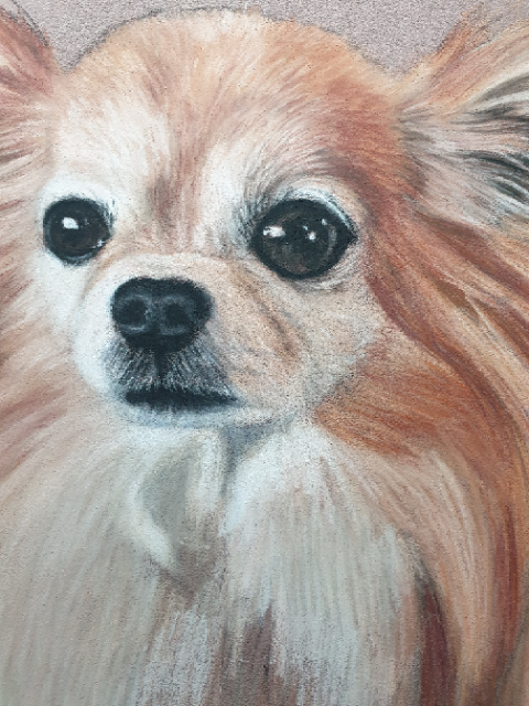 Close up of the progress of Pixie the chihuahua pastel dog portrait