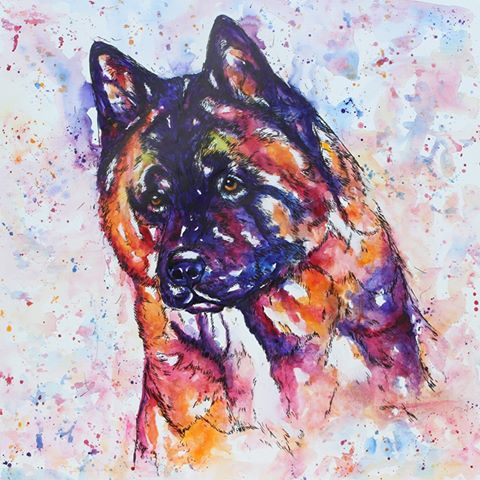 Akita dog portrait in watercolours on canvas, painted in purples, blues, oranges yellows and magenta