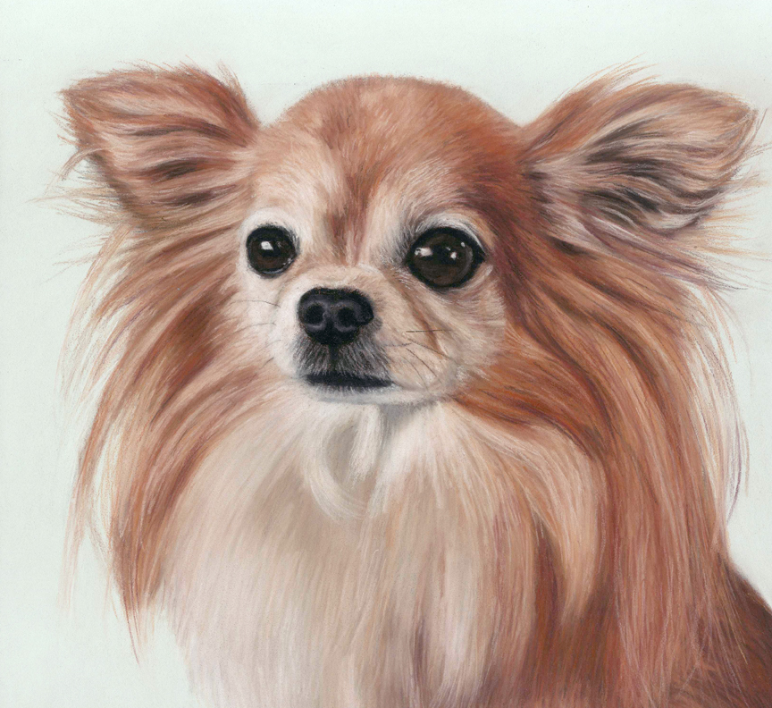 Chihuahua pastel portrait of Pixie with a very pale green background.