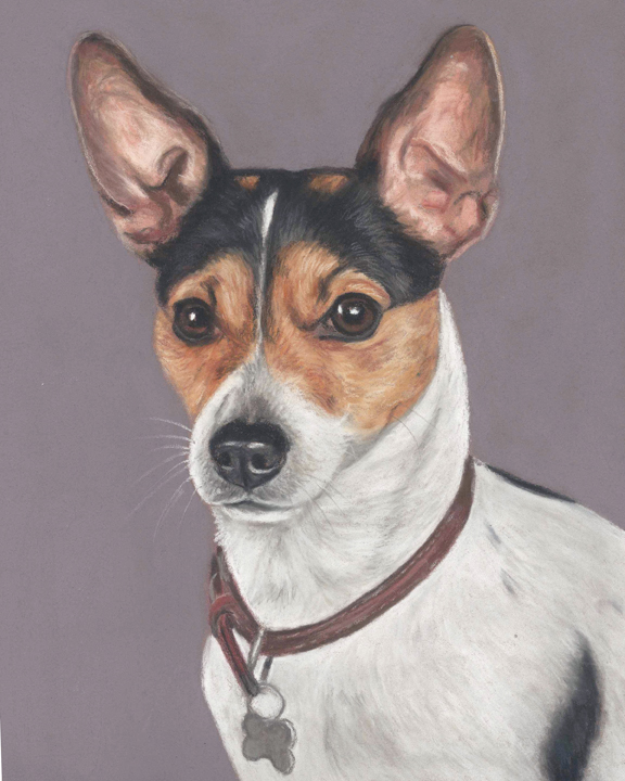 Taffy, dog portrait of a Jack Russell terrier in pastels.