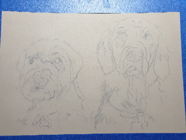 Sketch for double dog portrait commission