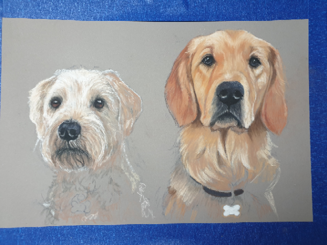 Double dog pet portrait of a wheaton terrier and golden retriever. Progress photograph.