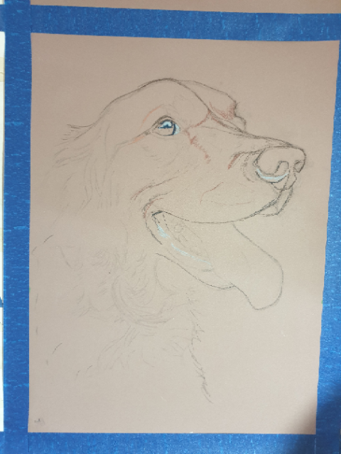 Sketch for Baiza's dog portrait, sketched out on clairfontaine pastelmat