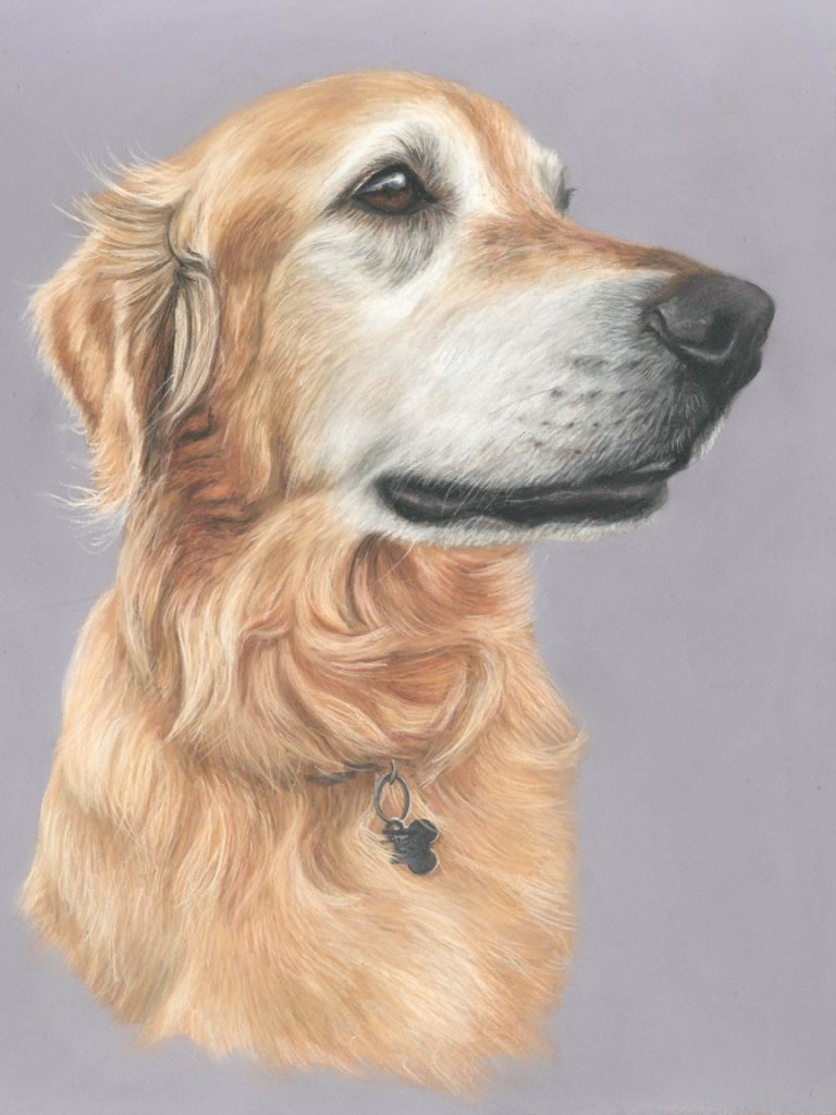 Beautiful golden retriever dog portrait on a greyish purple background, painted in pastels