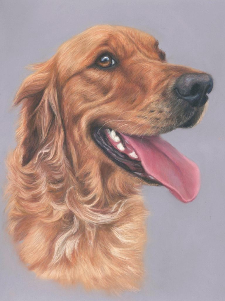 Beautiful dog pet portrait in pastels. A golden retriever called Morton on a purple grey backround