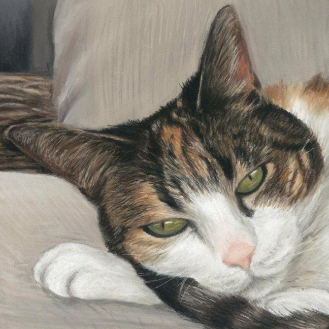 Cat portrait in pastels, tabby and white lying on a chair.
