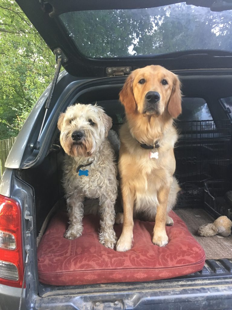 Reference photograph for a pet portrait. Two dogs sitting in the open boot of a car.
