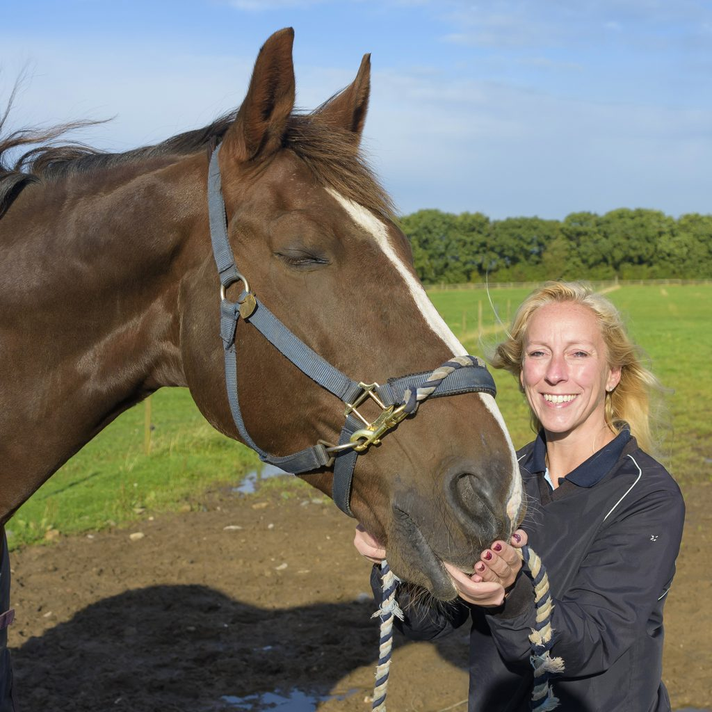 Bay horse with his owner in a field. Horse is wearing a head collar and the owner a blue jumper