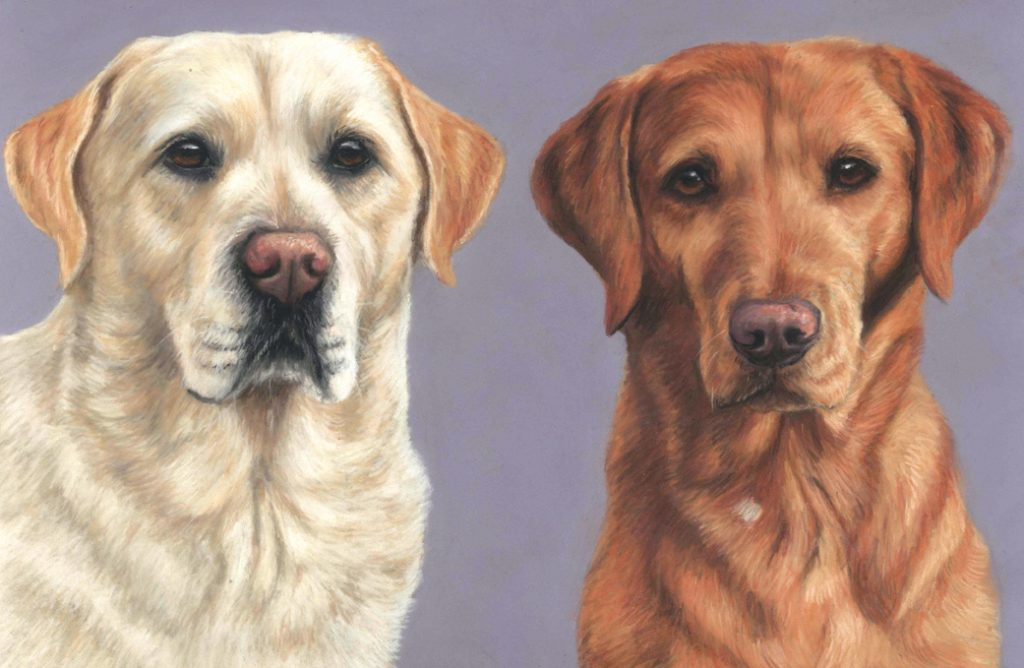 Labrador retriever pastel pet portrait. 15x10 inches with a pirple background