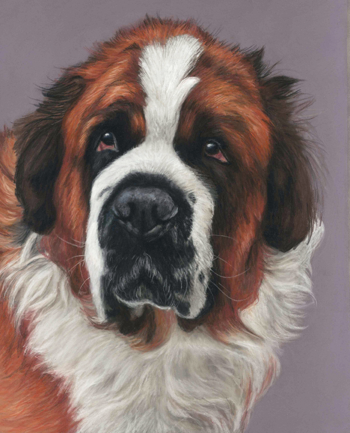 St Bernard dog portrait, Hugo, pet portrait painted in pastels on pastelmat paper