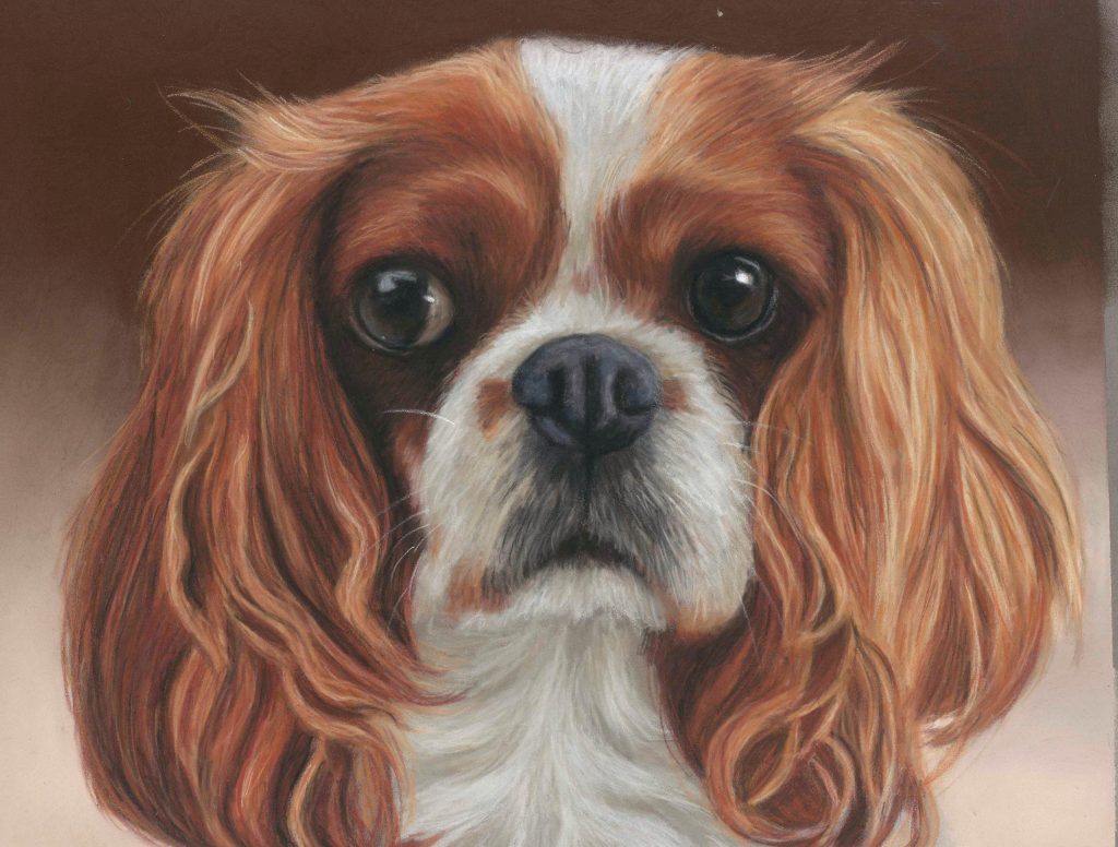 Mango, pastel pet portrait of Cavalier King Charles Spaniel with brown background