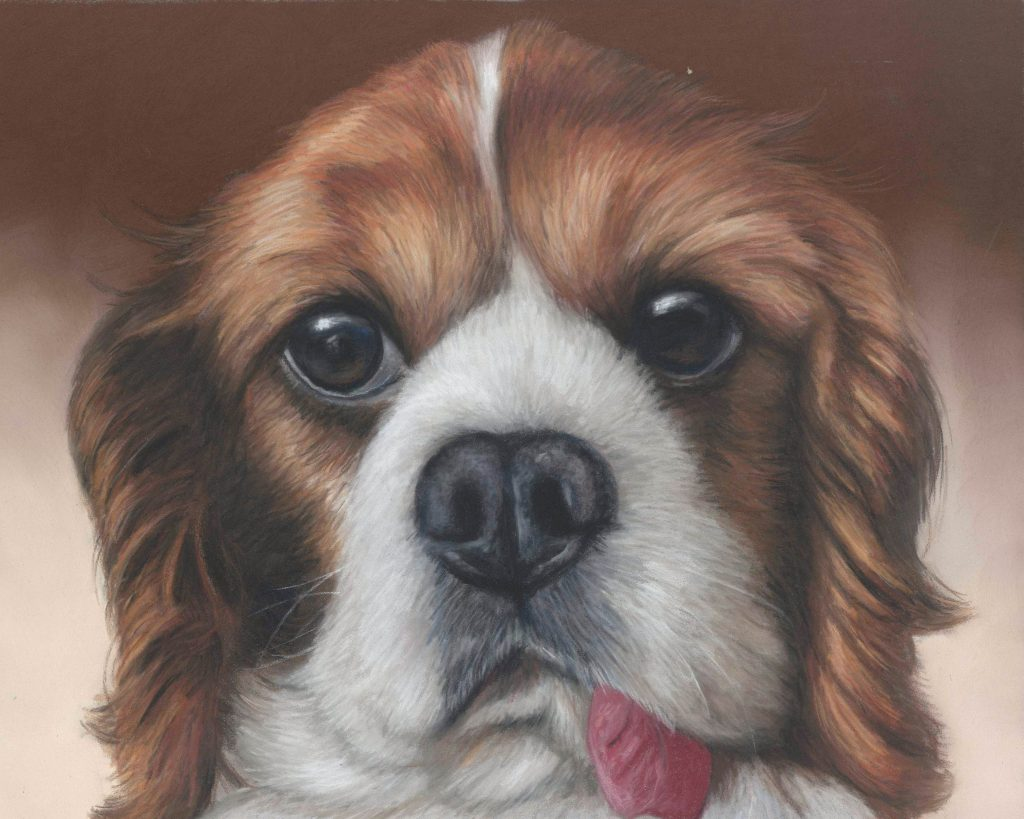 Perry, another pastel dog portrait. Cavalier King Charles spaniel on a brown background