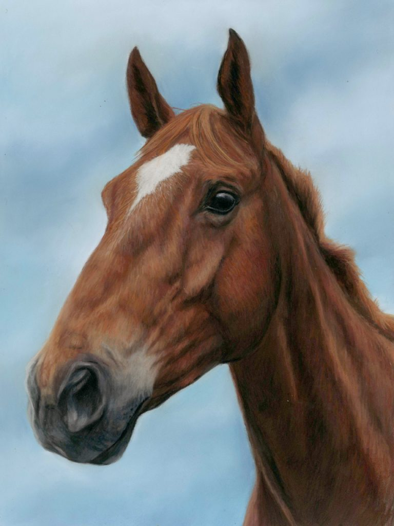 Horse portrait in pastels. Chesnut horse with a white star with a sky blue background. Horse portraits in pastels