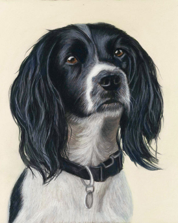 Beautiful pastel dog portrait in pastels of a black and white springer spaniel on a pale background, called Betsy
