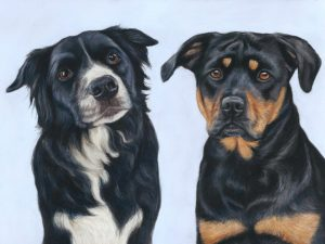 portrait of two dogs in pastel with a baby blue background