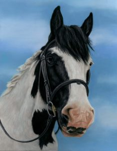 Scan of a piebald horse portrait in pastels with a blue background