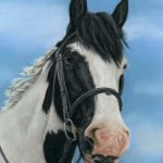 Pastel horse portrait of a piebald horse and blue sky