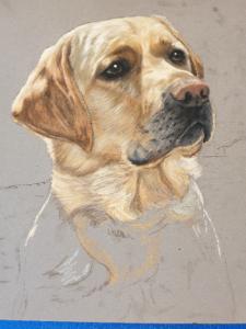 Start of Mack's pet portrait