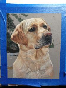 More progress on Mack, the yellow labs pastel pet portrait