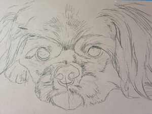 Dog portrait outline drawing, ready to start painting Ike's pet portrait in pastels