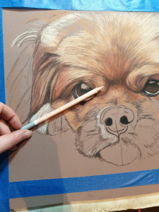 Pink pencil used for highlights on Ike's pet portrait