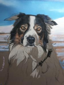 Pet portrait of Marmo the border collie, progress photograph