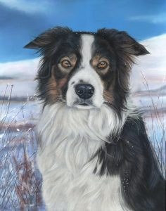Marmo, tri border collie. Finished dog portrait in pastels with snow and blue ski behind him