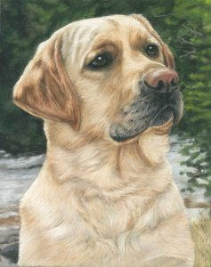 Pastel dog portrait of a yellow lab called Mack