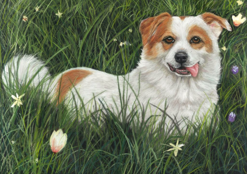 Lady, dog portrait in pastels of a white and tan corgi cross in the tall summer grass with a few flowers