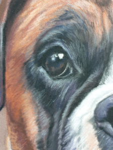 Eye with detail added on the boxer dog painting