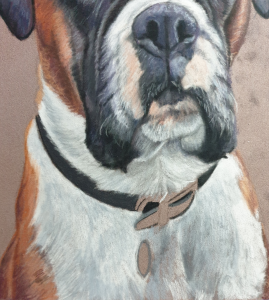 Progress on the dog portrait of a boxer Alfie in pastels, focusing on hhis chest and neck