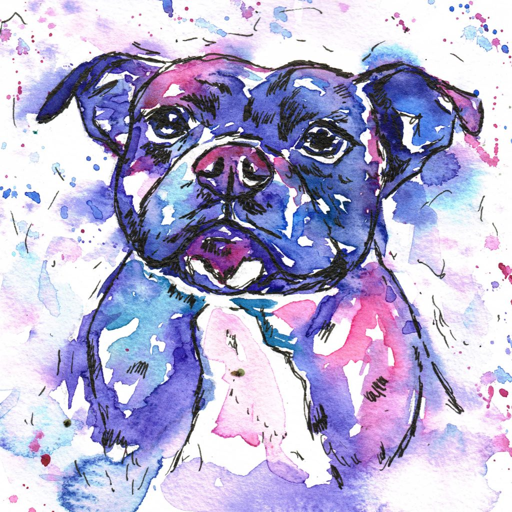 Staffordshore bull terrier pet portrait in the Jolly Spalshes watercolour style