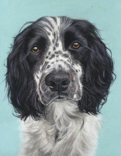 Murphy pastel dog portrait