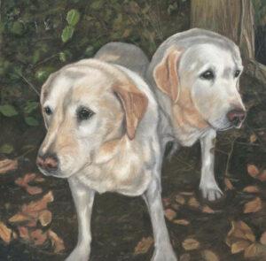 Double yellow labrador dog portrait