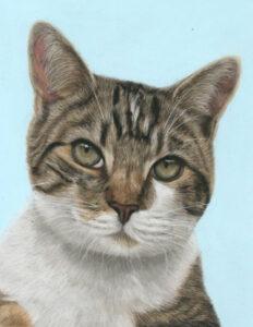 Teddy cat pet portrat in pastels. Tabby cat portrait