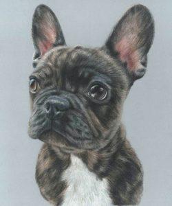 french bulldog pet portrait commission