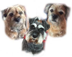 Mock up for triple dog pet portrait