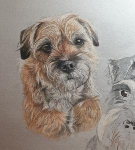 Broder terrier dog portrait
