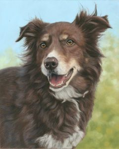 Dog portraits in pastel. Bailey the Border Collie