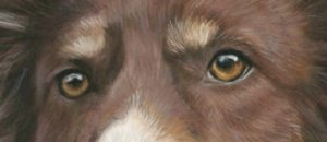 Eyes from Baileys pet portrait